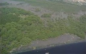the mangrove surrounding Gramacho