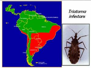 prevalence of Triatoma infestans in LAC (click to enlarge)
